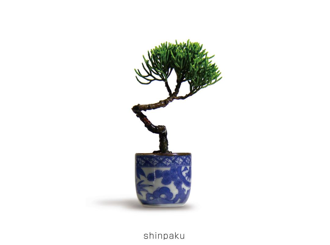 shinpaku